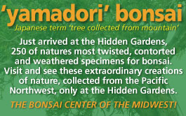 yamadori bonsai news