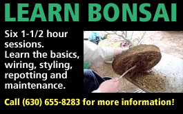 learn bonsai image